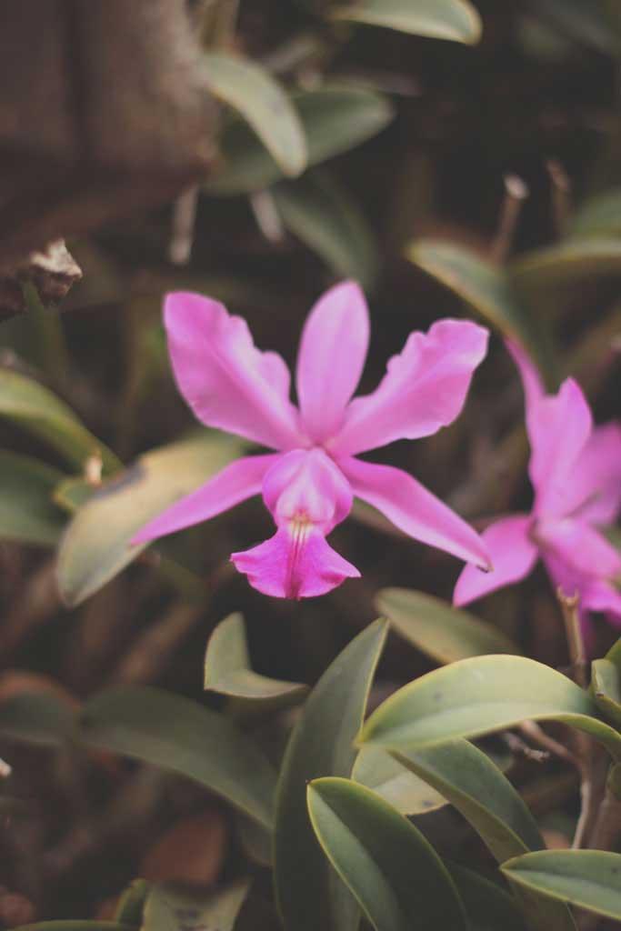 Orquídea editada no photoshop