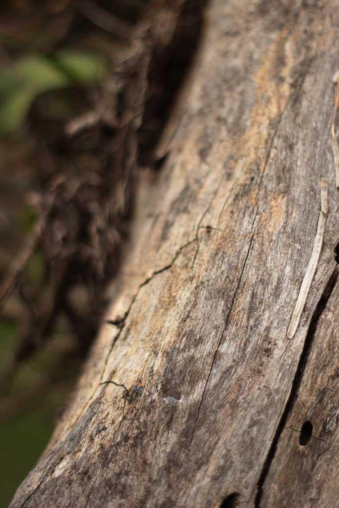 Madeira de pica pau