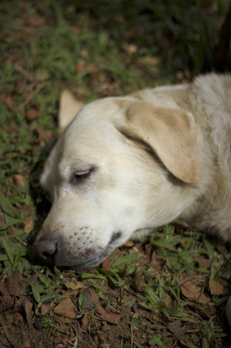 Neruda dormindo
